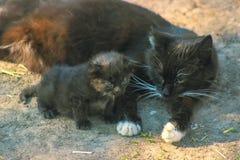 Den moderkatten och kattungen ligger på solen Royaltyfri Fotografi
