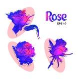 Den moderna dekorativa uppsättningen av lilor slösar rosor för designpresentat royaltyfri illustrationer