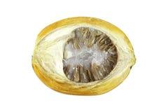 Den mogna aceraen eller betelen gömma i handflatan mutterfrukt med banan Arkivbilder