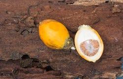 Den mogna betelen gömma i handflatan på dekadent trä, det ` s en jordbruksprodukt arkivbild