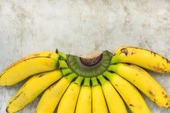 Den mogna färgrika gruppen av Gros Michel Baby Bananas på filial på Grey Stone Concrete Cement Metal skrapade bakgrund Arkivfoto
