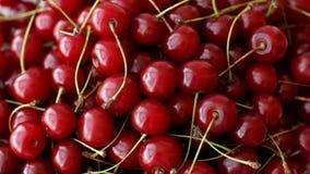 Den mogna körsbäret bär frukt den bästa sikten stock video