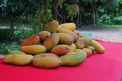 Den mogna mango, variation för tabellfrukt och processar bär frukt Royaltyfri Bild