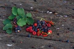 Den mogna shadberryen, redcurranten, hallonet med filialen och sidor spridde på den red ut trätabellen i trädgård Royaltyfri Foto