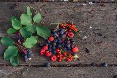 Den mogna shadberryen, redcurranten, hallonet med filialen och sidor spridde på den red ut trätabellen i trädgård Top beskådar Arkivbild