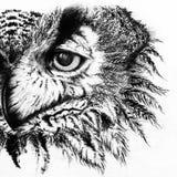 Den monokromma svartvita ugglafärgpulverlinjen konst skissar Fotografering för Bildbyråer