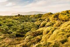 Den mossiga Lava Fields nära Vik i Island royaltyfri foto