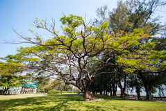 Den Mrigadayavan slotten (Marukhathaiyawan), Cha-är, Thailand Royaltyfria Bilder