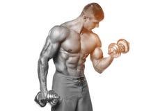 Den muskulösa mannen som utarbetar att göra, övar med hantlar på biceps, stark manlig abs som isoleras över vit Royaltyfri Fotografi