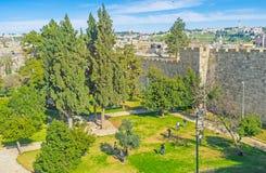 Den mycket lilla trädgården på stadsväggar Arkivbild