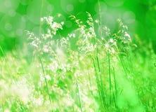 Den mycket lilla våren blommar med grön bokeh Fotografering för Bildbyråer