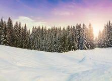 Den mysiga vinterplatsen med snö täckte träd i bergen Arkivfoton