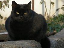 Den mystiska blicken av den svarta katten arkivfoton