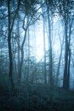 Den mystiska höstskogen med slingan i blått fördunklar Härligt landskap med träd, bana, dimma mot bakgrund field blåa oklarheter  arkivbild