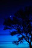 Den mystiska natten landskap stock illustrationer