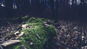 Den mystiska skogen den högsta möjliga upplösningen och skärpan av bilden arkivfoton