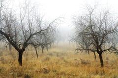 DEN MYSTISKA SKOGEN I HÖST MED TRÄD OCH VAGGAR Fotografering för Bildbyråer