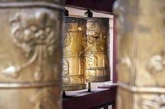 Den nära övre bönen mal Mongoliet Fotografering för Bildbyråer