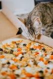 Den nära övre kattungen sniffar pizza royaltyfri foto