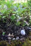 Den nära övre sikten av gröna växter, små stycken av vaggar och trä och ett snigelhem royaltyfri fotografi