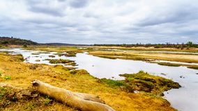 Den nästan torra Olifant floden i den Kruger nationalparken i Sydafrika Arkivbilder
