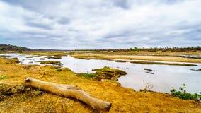 Den nästan torra Olifant floden i den Kruger nationalparken i Sydafrika Royaltyfri Fotografi