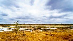 Den nästan torra Olifant floden i den Kruger nationalparken i Sydafrika Arkivbild