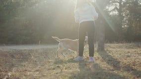 Den nätta brunetten går med enfärgad skog för labrador på våren stock video