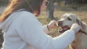 Den nätta brunetten går med enfärgad skog för labrador på våren lager videofilmer