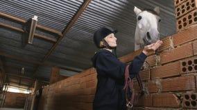Den nätta kvinnan matar hästen med socker i stall stock video