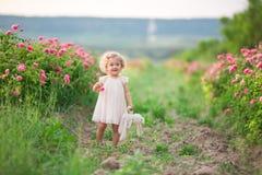 Den nätta lockiga barnflickan går i vårträdgården med blommor för rosa färgblomningrosor, solnedgångtid Royaltyfri Fotografi