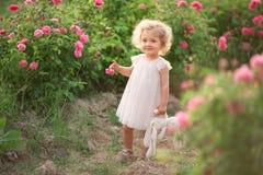 Den nätta lockiga barnflickan går i vårträdgården med blommor för rosa färgblomningrosor, solnedgångtid Arkivbilder