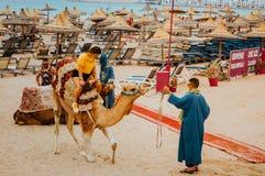 Den nätta turisten för den unga kvinnan rider en kamel för första gången arkivfoton