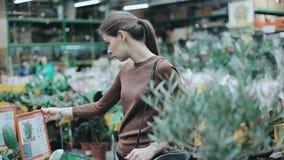 Den nätta unga kvinnan som in väljer, shoppar en växt för hennes lägenhet Husväxtavdelning i supermarket, hemmiljö stock video