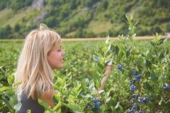 Den nätta unga kvinnan väljer frukter på ett blåbärfält tonat royaltyfria bilder