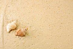 Meeresschnecken im Sand Royaltyfria Bilder