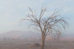 Den Namib öknen, roadtrip i den underbara Namib Naukluft nationalparken, loppdestination i Namibia, Afrika Flätad akacia tr Arkivbild