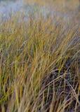 Den naturliga grästexturen Royaltyfri Fotografi