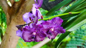Den naturliga purpurfärgade orkidén blommar på ett grönt gräs som en bakgrund Arkivfoto