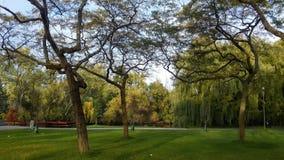 Den naturliga Toronto ön parkerar Royaltyfria Foton