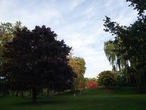 Den naturliga Toronto ön parkerar Royaltyfria Bilder