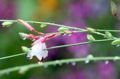 Den nedböjda blomman Royaltyfri Fotografi