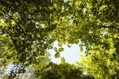 Den nedersta sikten av träden i parkerar Solljusavbrott till och med sidorna av träd arkivbild