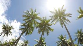 Den nedersta sikten på palmträd mot bakgrunden av blått sol- himlen med rörande vita moln stock video