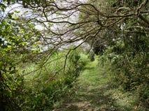 Den nedersta slingan, Saba Arkivbild