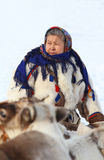 Den Nenets kvinnan i medborgarekläder bland hjortar Royaltyfria Bilder