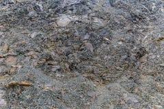 den nevada rocken texture oss Fotografering för Bildbyråer