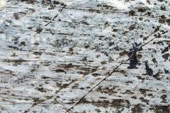 den nevada rocken texture oss Royaltyfri Bild