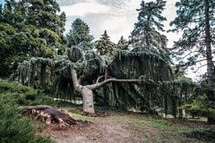 Den Nikitsky botaniska trädgården, härlig gräsplan parkerar med olika träd, växter och banor för att gå, dekorativt arbeta i träd arkivbilder