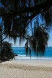 Den Noosa stranden med gömma i handflatan ormbunksblad i förgrund - ståendebild royaltyfri bild